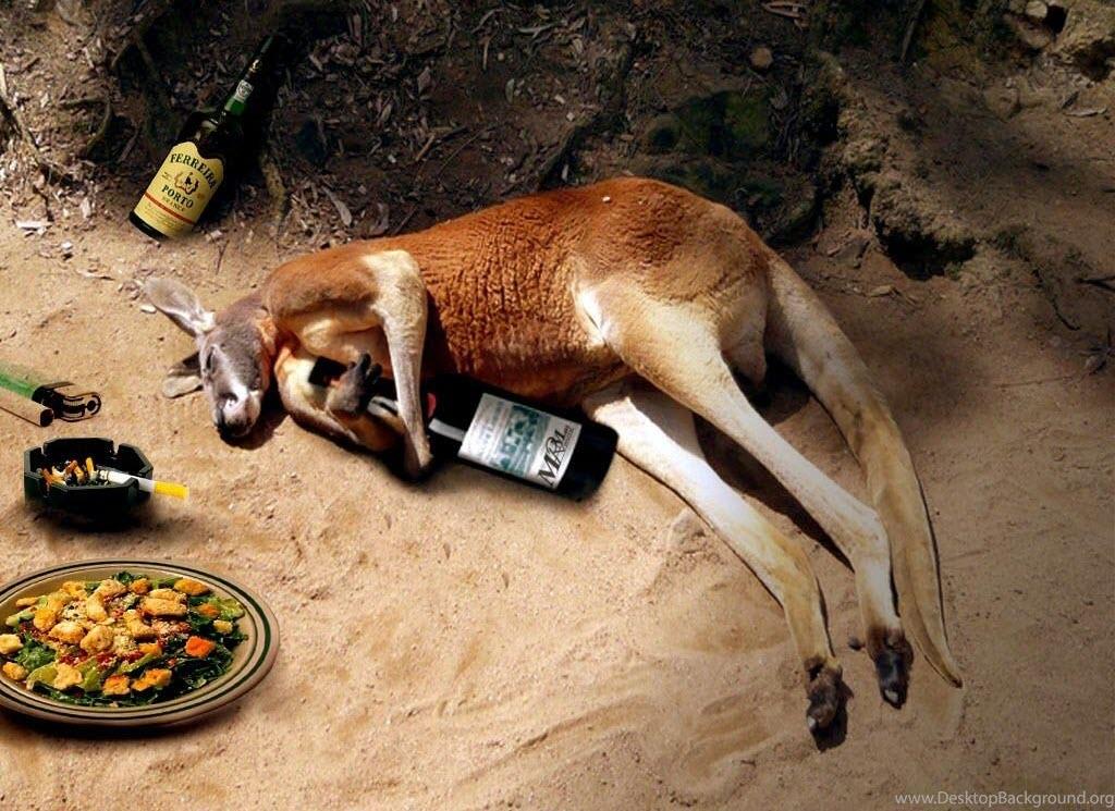 Hình ảnh say rượu ở động vật hài hước nhất