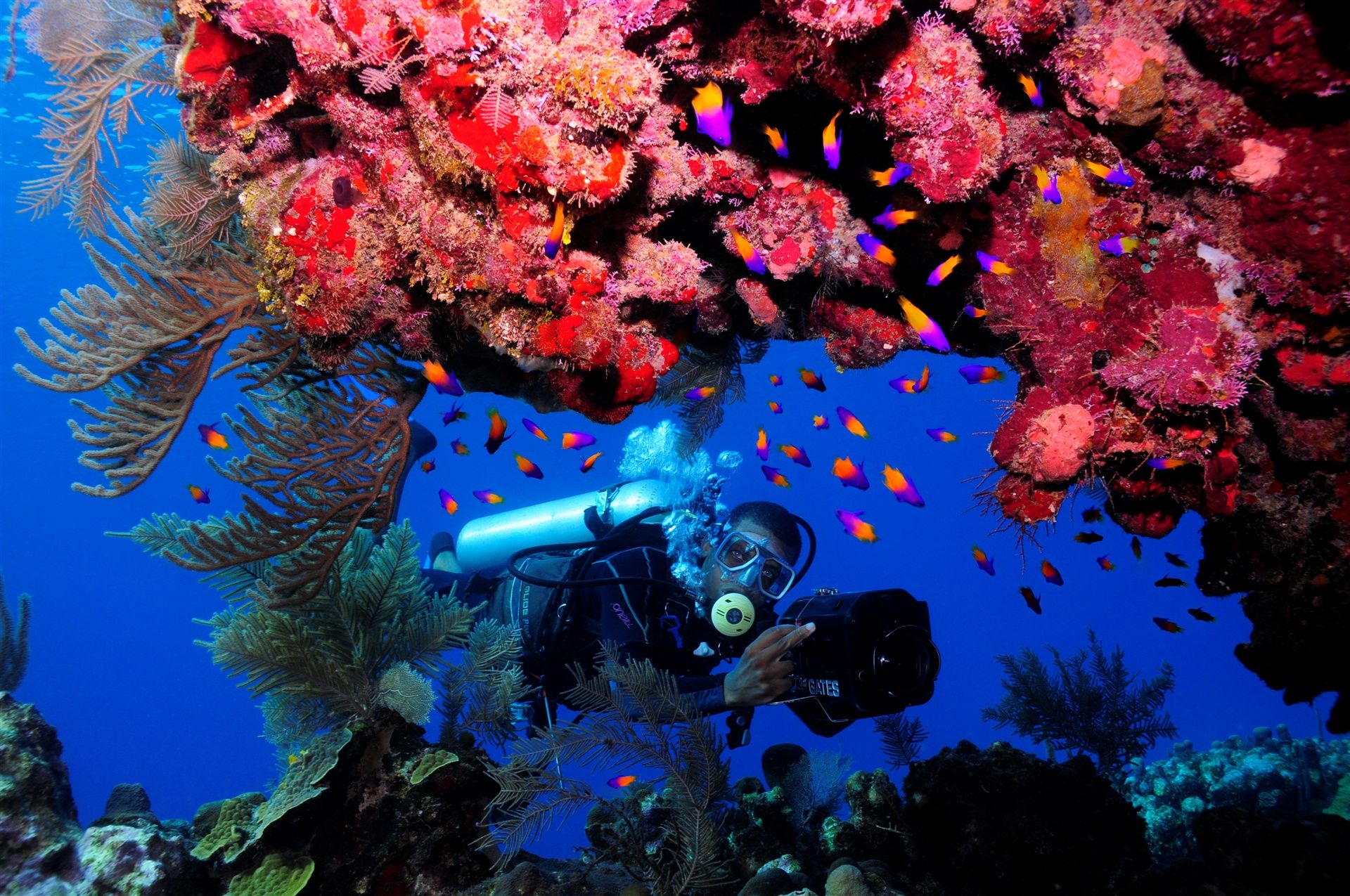 Ảnh lặn biển ngắm san hô
