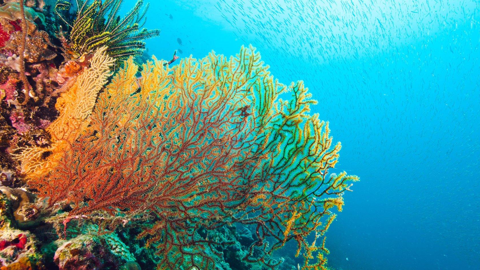 Ảnh rạn san hô Great Barrier