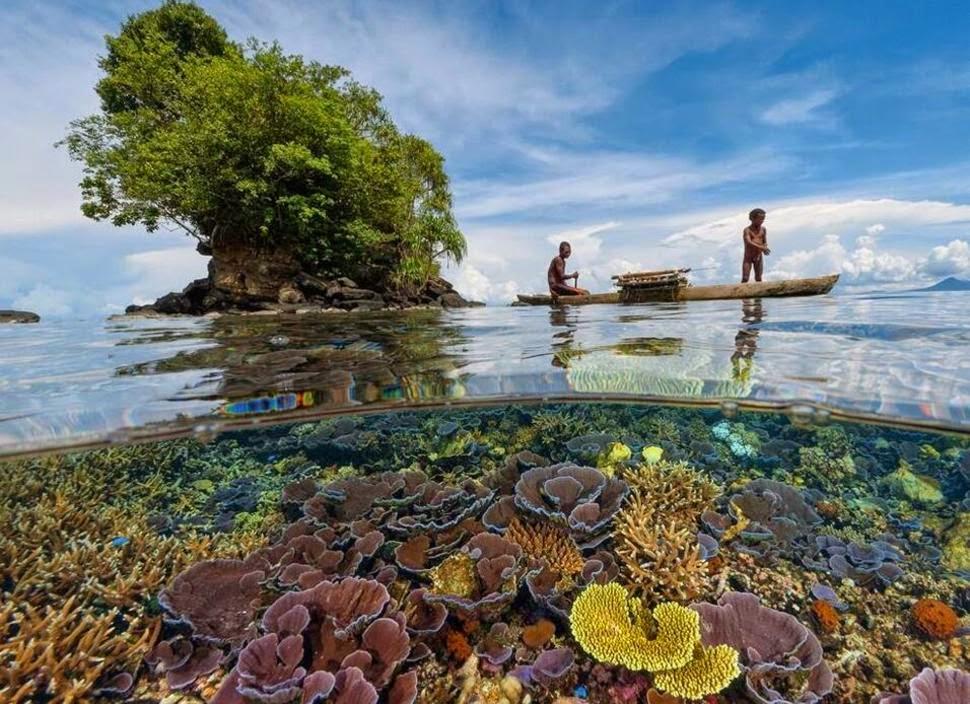 Ảnh san hô cực ấn tượng chụp ở mặt nước