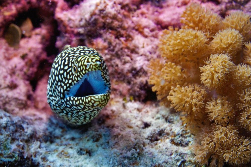 Ảnh san hô đẹp
