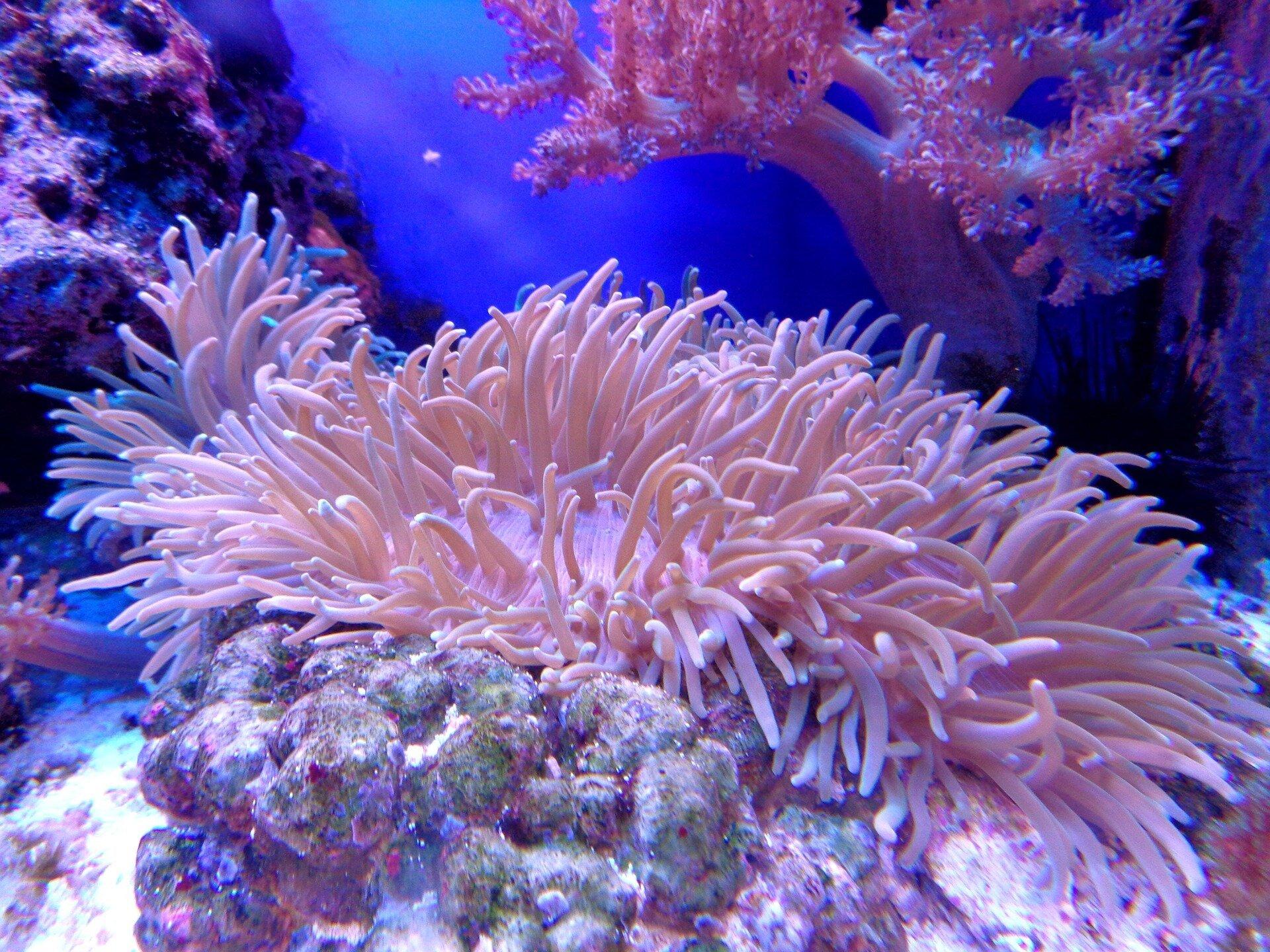 Ảnh san hô dưới đáy biển đẹp