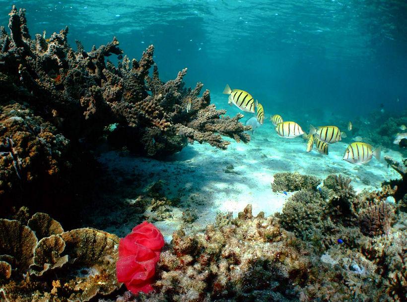 Bờ biển Ningaloo, Australia - rặng san hô gần bờ đẹp nhất thế giới