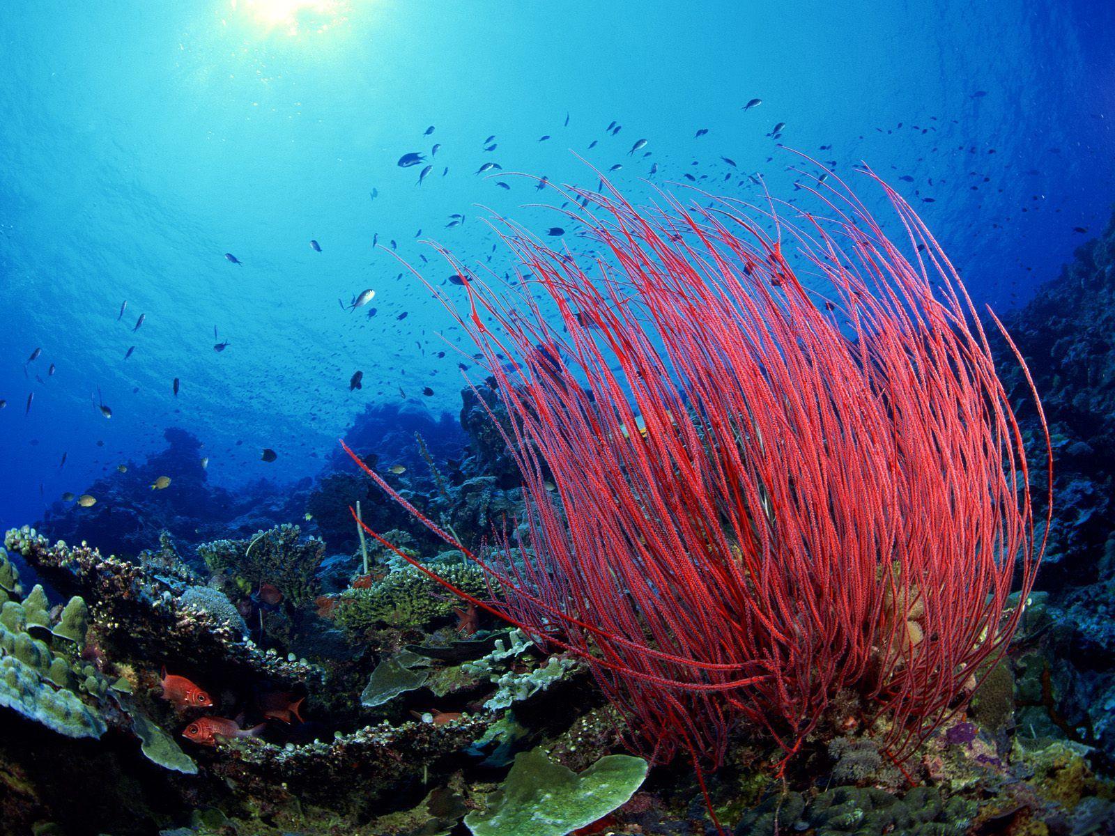 Hình ảnh đẹp nhất về rạn san hô đỏ