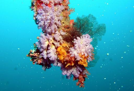 Hình ảnh đẹp nhất về san hô