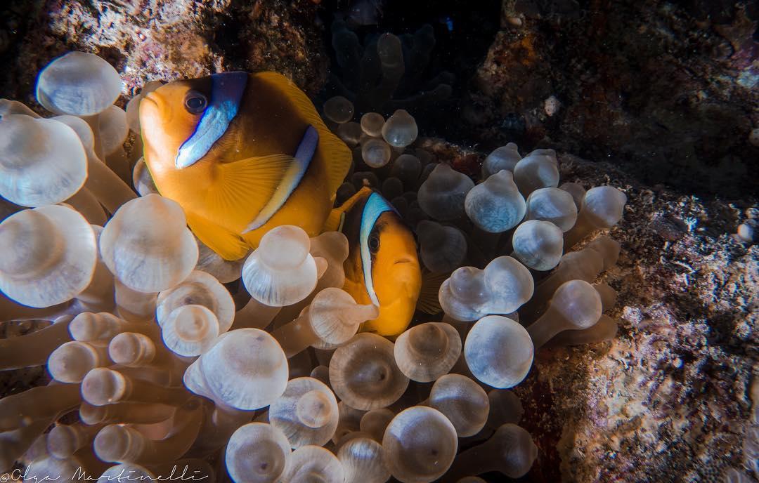 Hình ảnh loài san hô tuyệt đẹp dưới đáy biển Nha Trang
