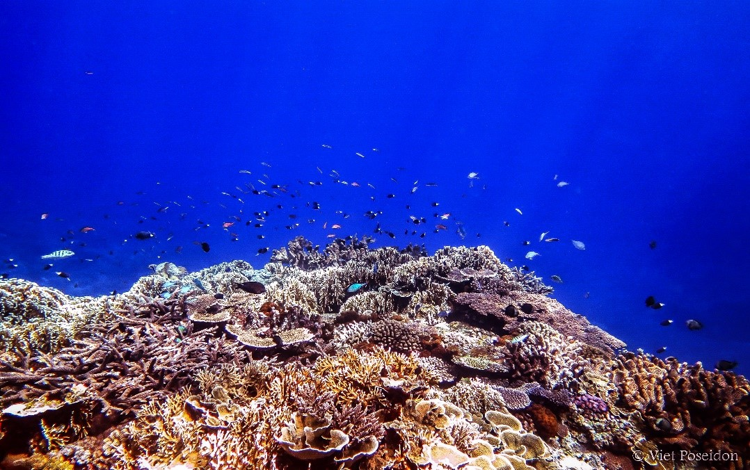 Hình ảnh rạn san hô đẹp