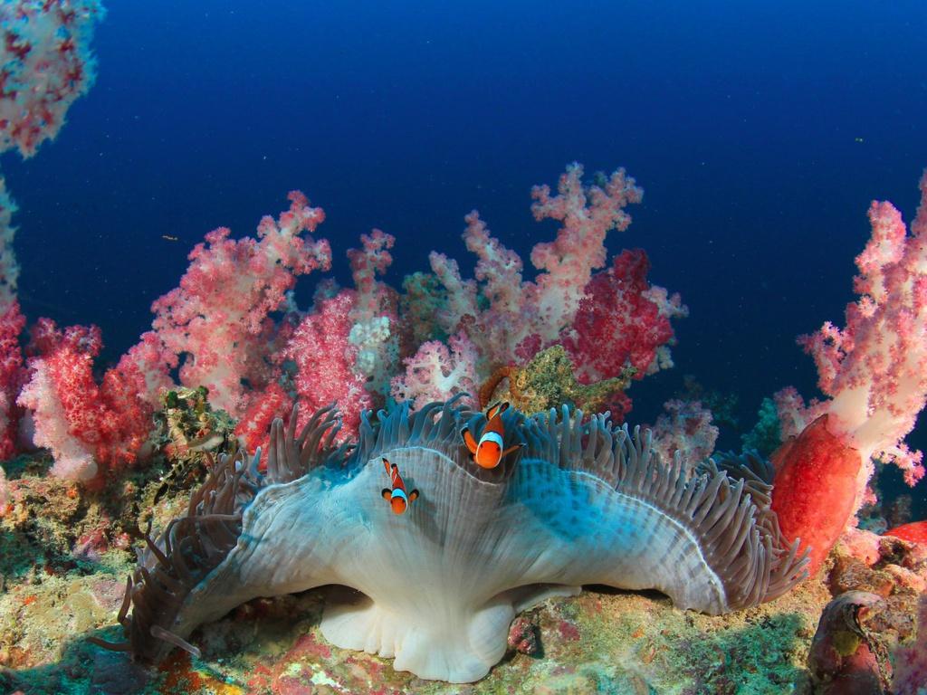 Hình ảnh rạn san hô dưới đáy đại dương cực đẹp