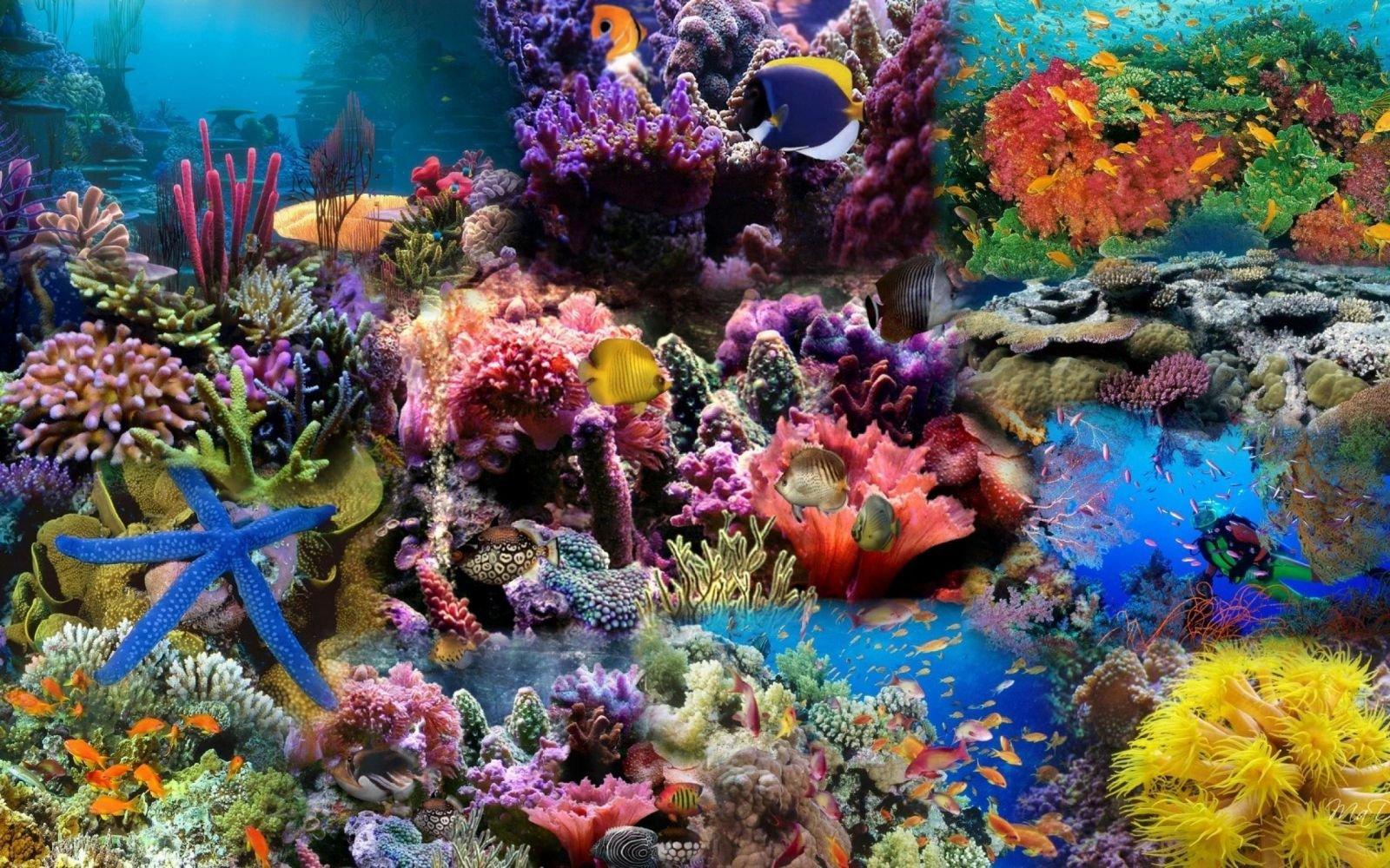 Hình ảnh rạn san hô dưới đáy đại dương tuyệt đẹp