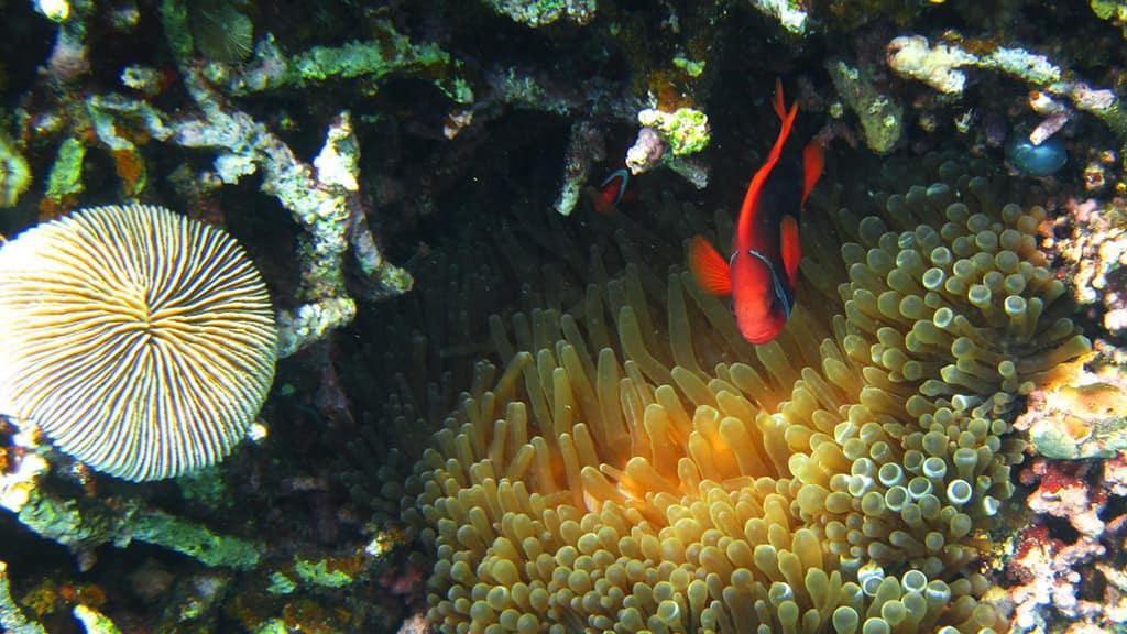 Hình ảnh rạn san hô siêu đẹp