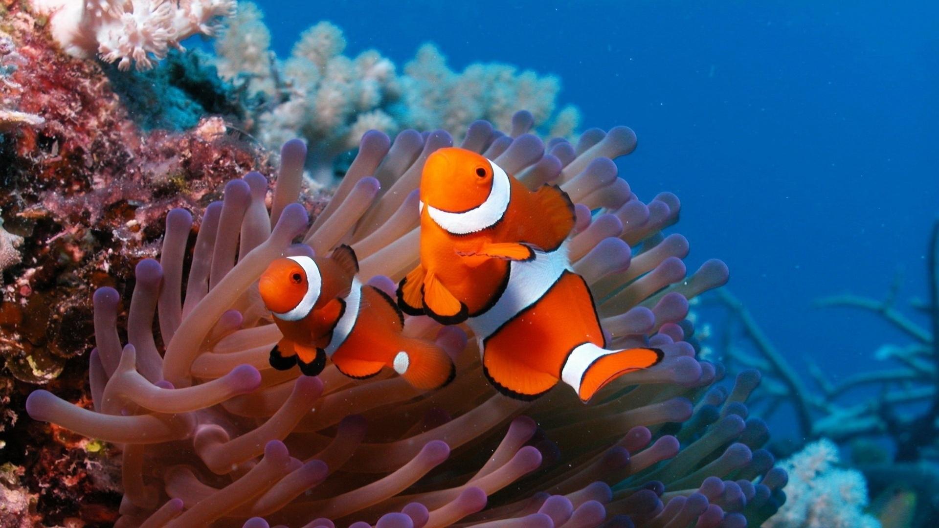 Hình ảnh rạn san hô tuyệt đẹp