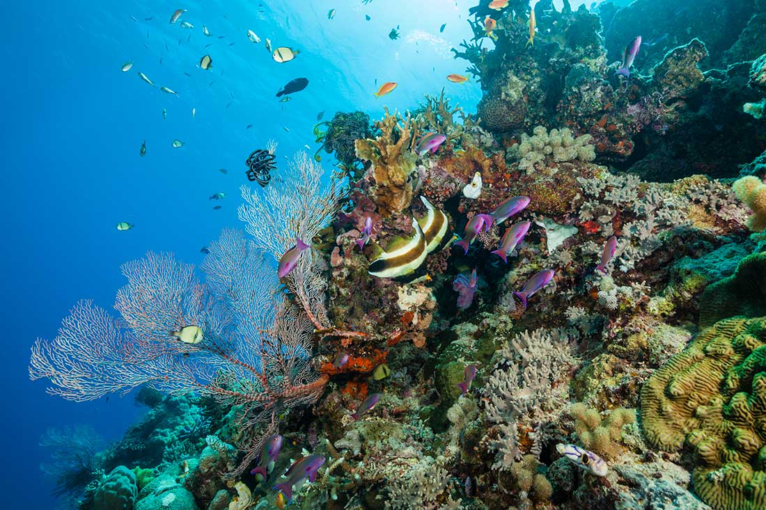 Hình ảnh rạn san hô và các sinh vật biển