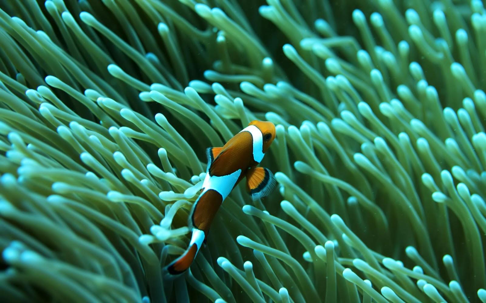 Hình ảnh san hô biển cùng chú cá cảnh