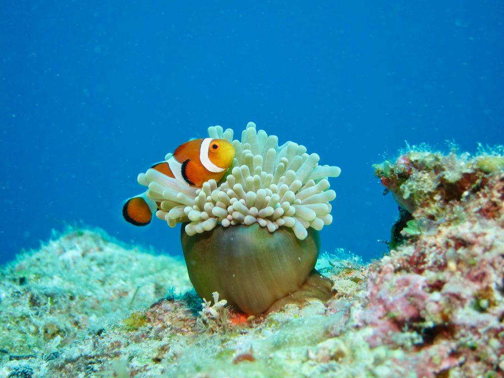 Hình ảnh san hô biển đẹp nhất