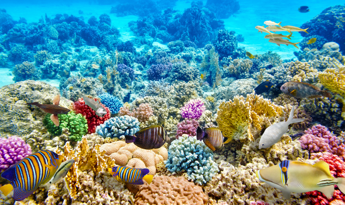 Hình ảnh san hô biển dưới đáy đại dương