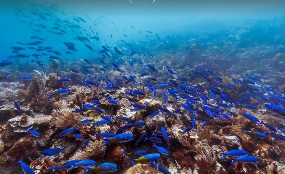 Hình ảnh san hô đại dương đẹp nhất