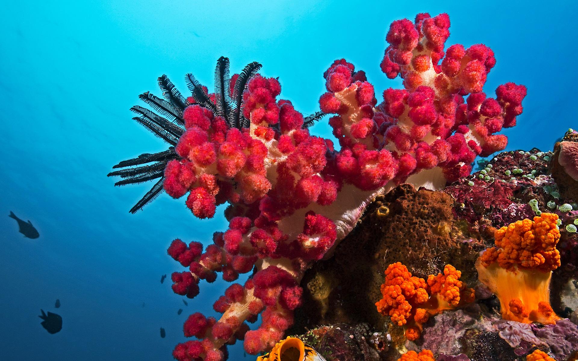 Hình ảnh san hô đẹp đầy thơ mộng