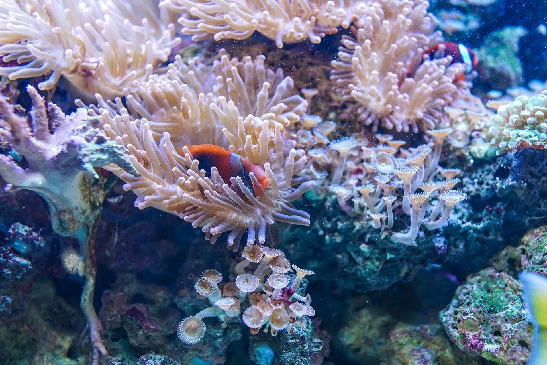 Hình ảnh san hô đẹp nhất