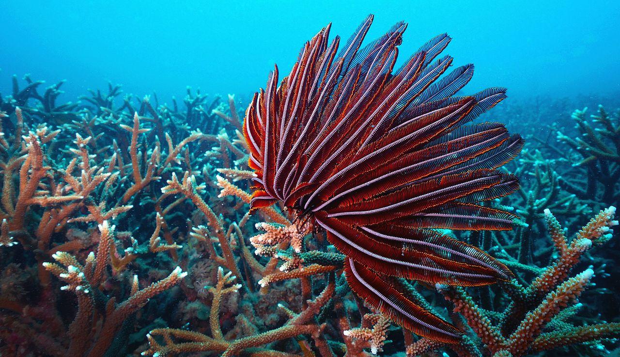 Hình ảnh san hô đỏ tuyệt đẹp