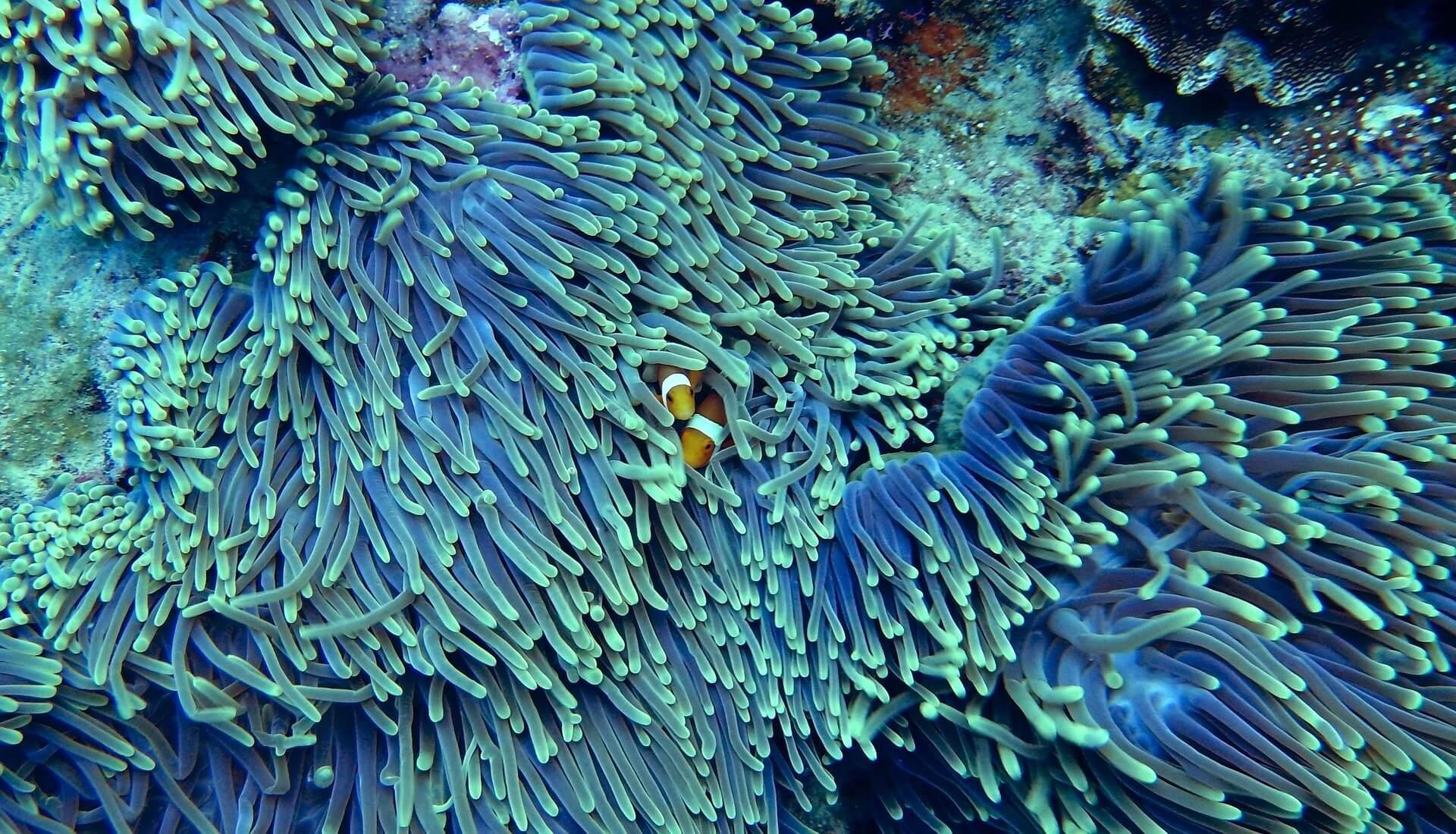Hình ảnh san hô dưới biển cực đẹp