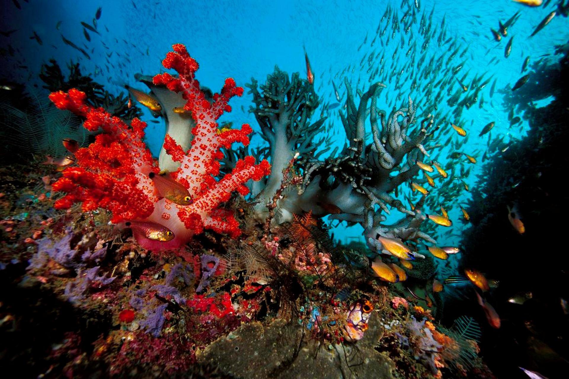 Hình ảnh san hô dưới đáy biển đẹp nhất