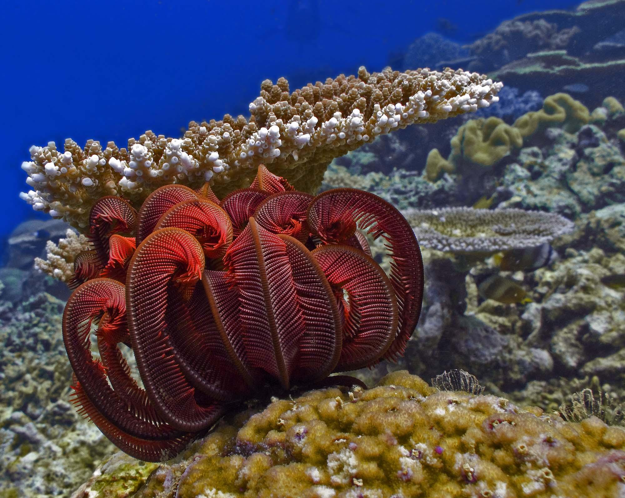 Hình ảnh san hô lông vũ - loài san hô đột biến đẹp nhất