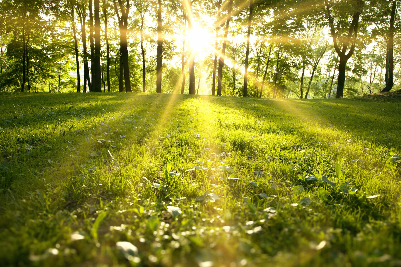 Hình ảnh trời nắng ở cánh đồng