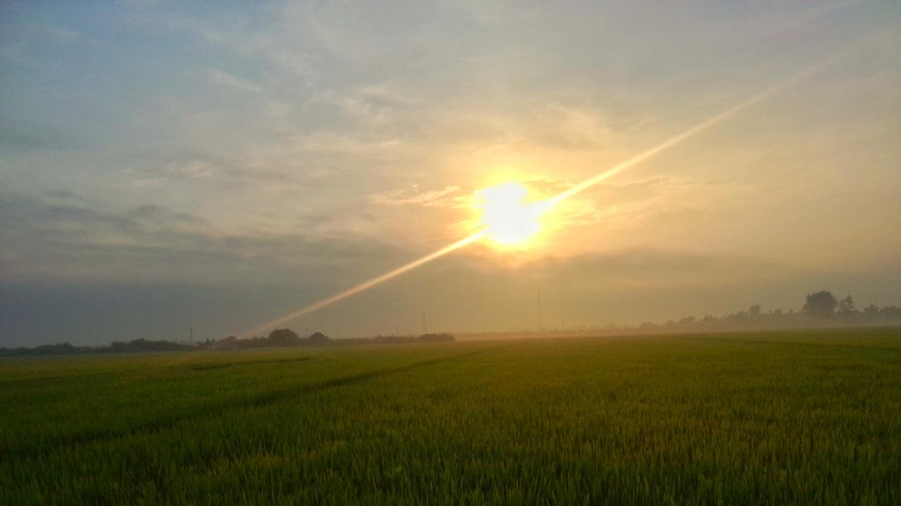 Hình ảnh trời nắng trên cánh đồng