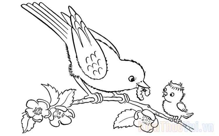 Tranh tô màu con chim