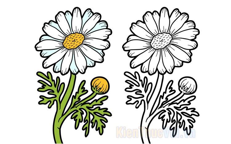 Tranh tô màu hoa cúc