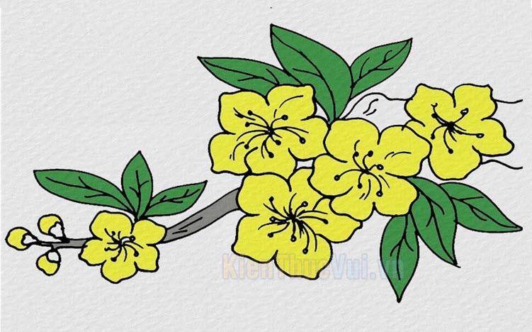 Tranh tô màu hoa đào, hoa mai
