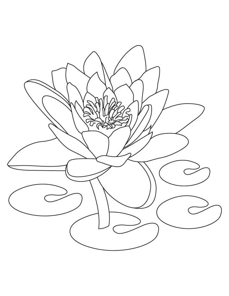 Hình tô màu bông hoa sen