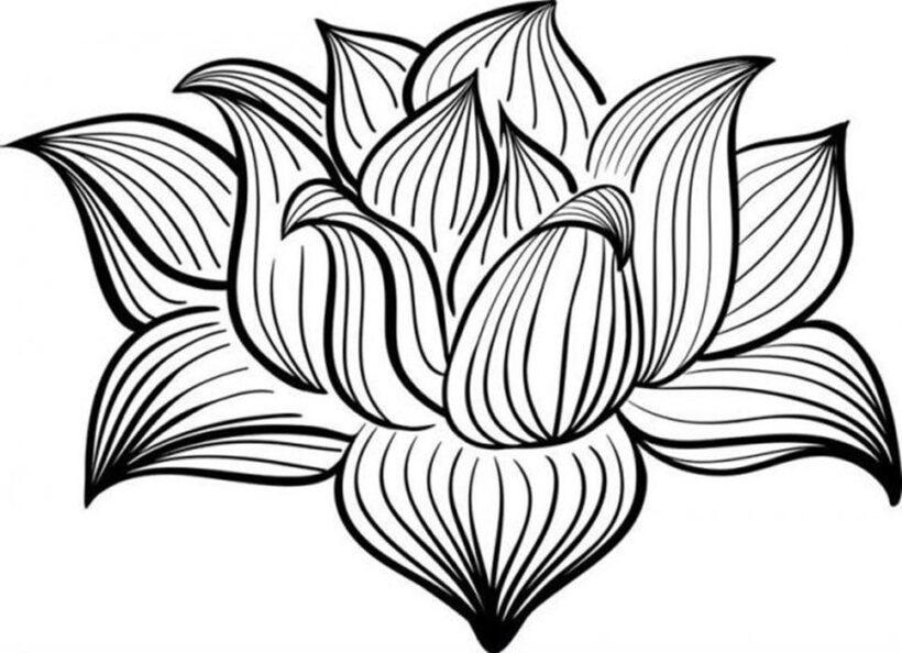 Hình tô màu bông sen nở đẹp nhất