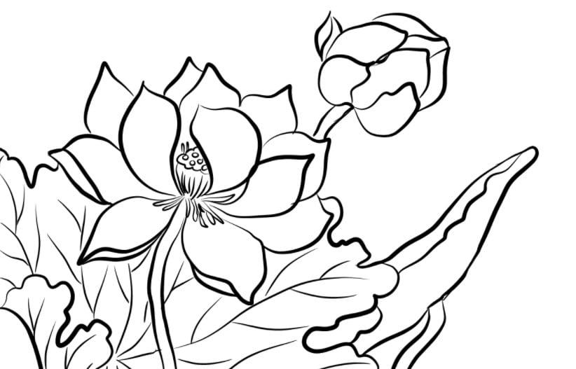 Hình tô màu hoa sen