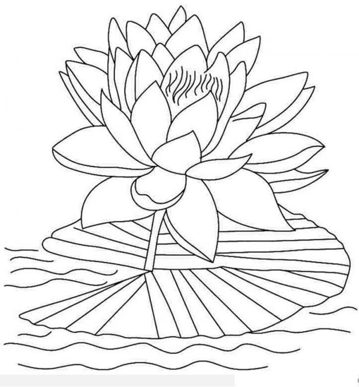 Tranh tô màu bông hoa sen
