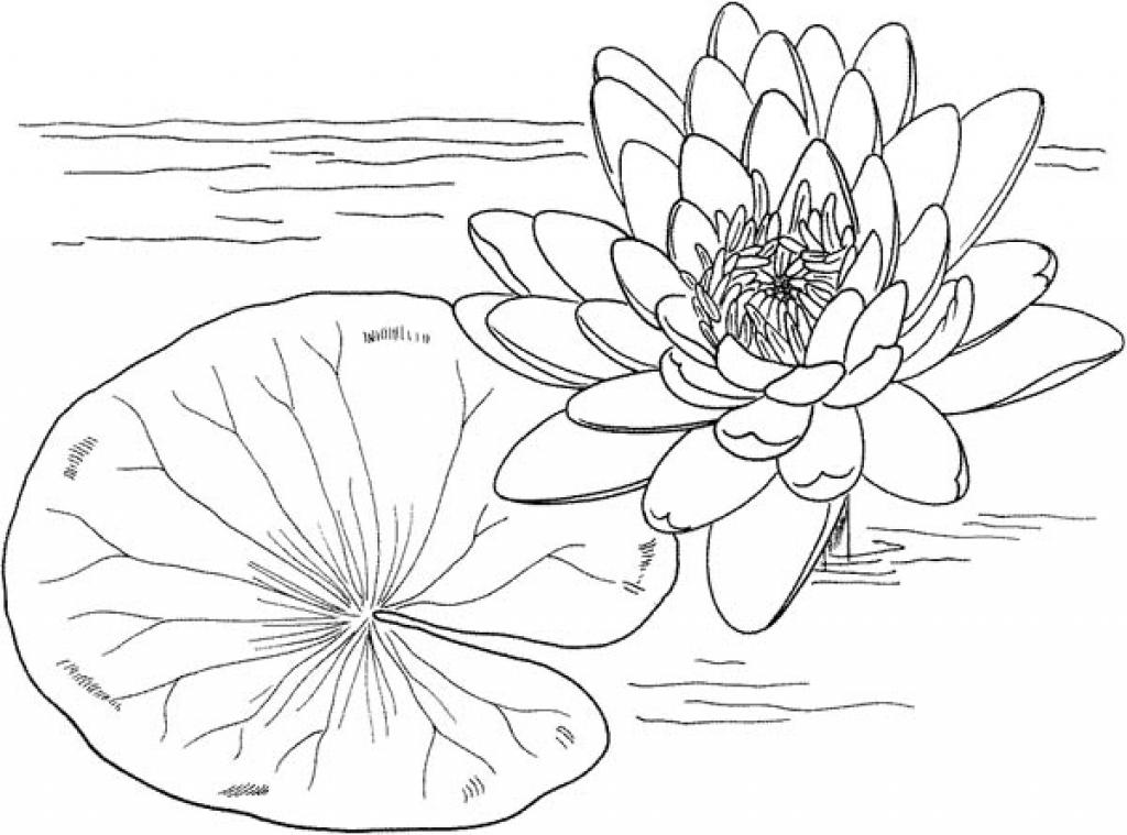 Tranh tô màu bông sen và lá đẹp