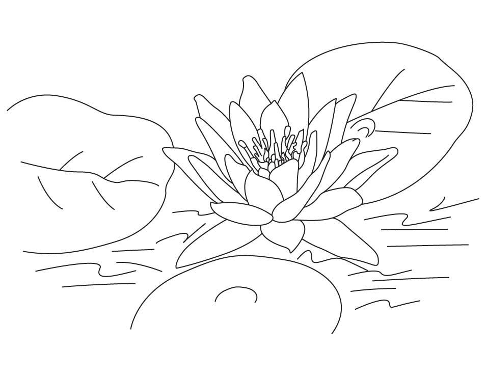 Tranh tô màu chủ đề hoa sen