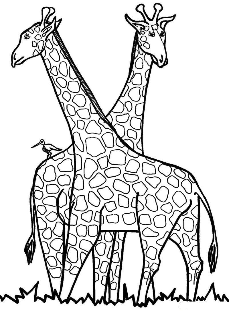 Tranh tô màu hình 2 con hươu cao cổ