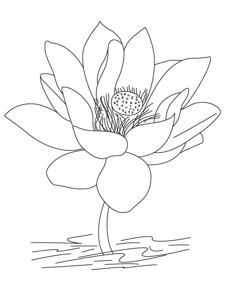 Tranh tô màu hình hoa sen