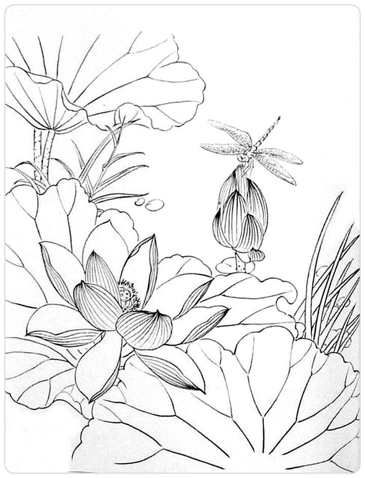 Tranh tô màu hoa sen nở cực đẹp