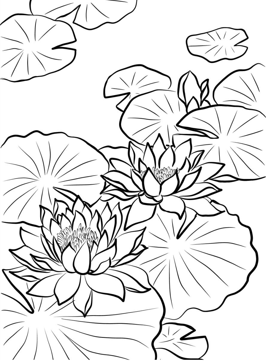 Tranh tô màu hoa sen nở
