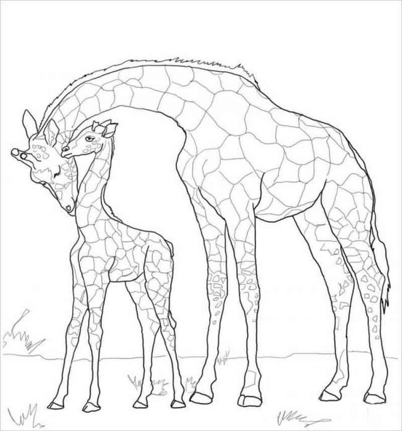 Tranh tô màu hươu cao cổ mẹ và con