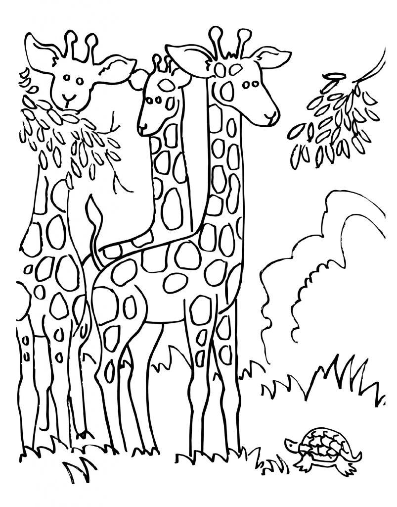 Tranh tô màu những con hươu cao cổ