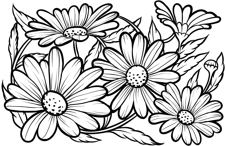 Hình hoa cúc tô màu cho bé