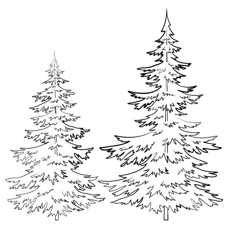Hình tô màu hai cây thông