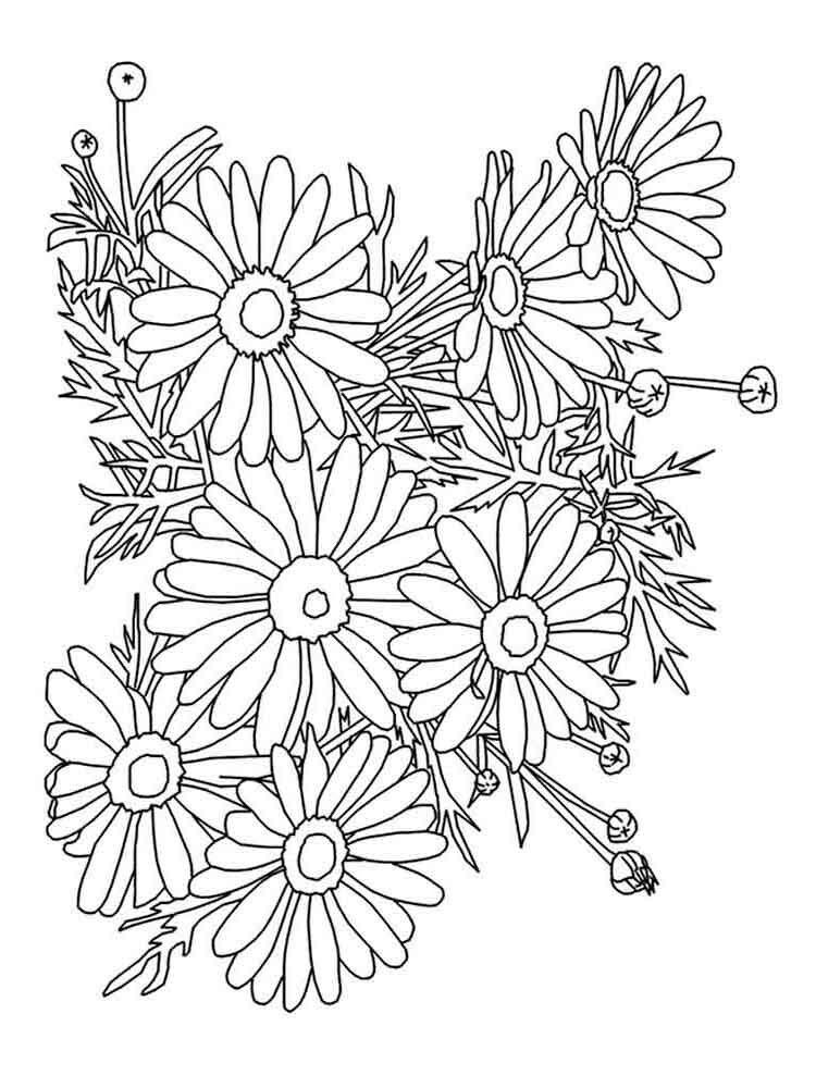 Tranh cho bé tô màu hình hoa cúc