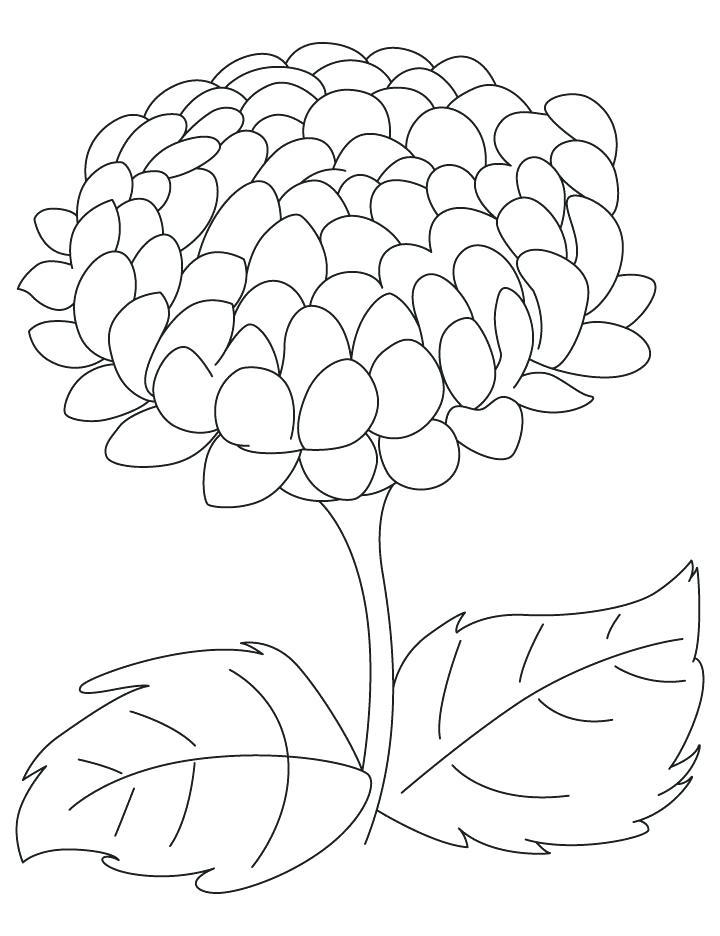 Tranh tô màu bông hoa cúc đơn giản