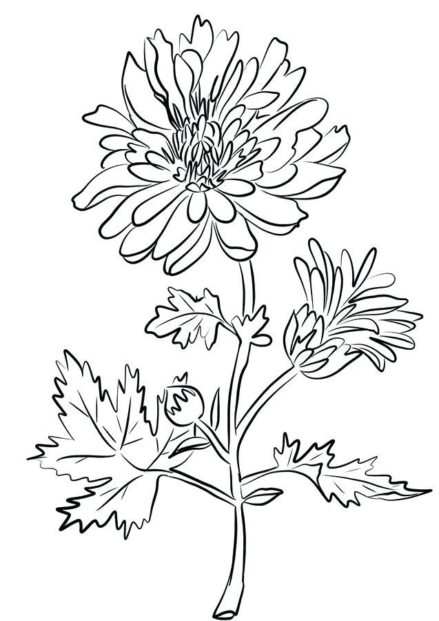 Tranh tô màu cành hoa cúc đẹp