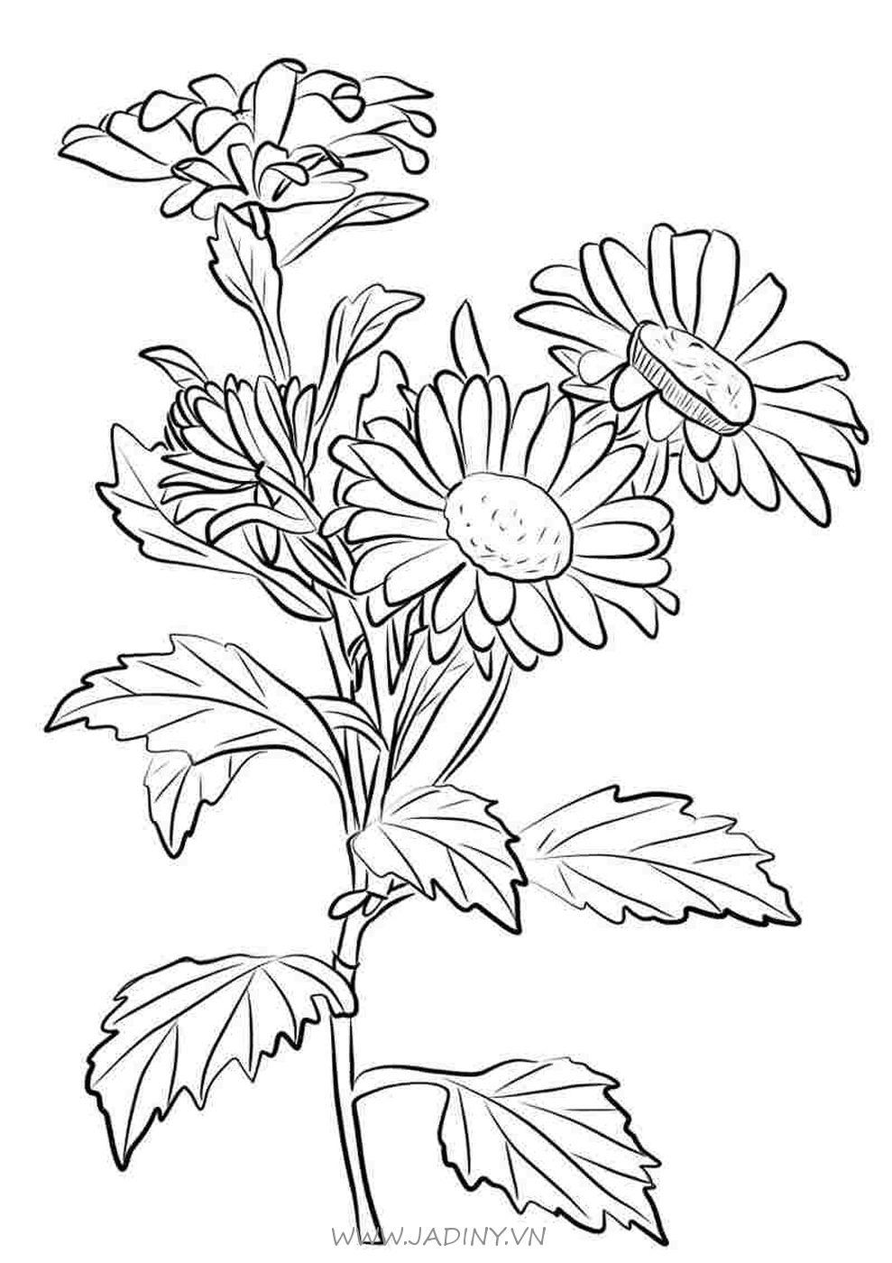 Tranh tô màu cành hoa cúc
