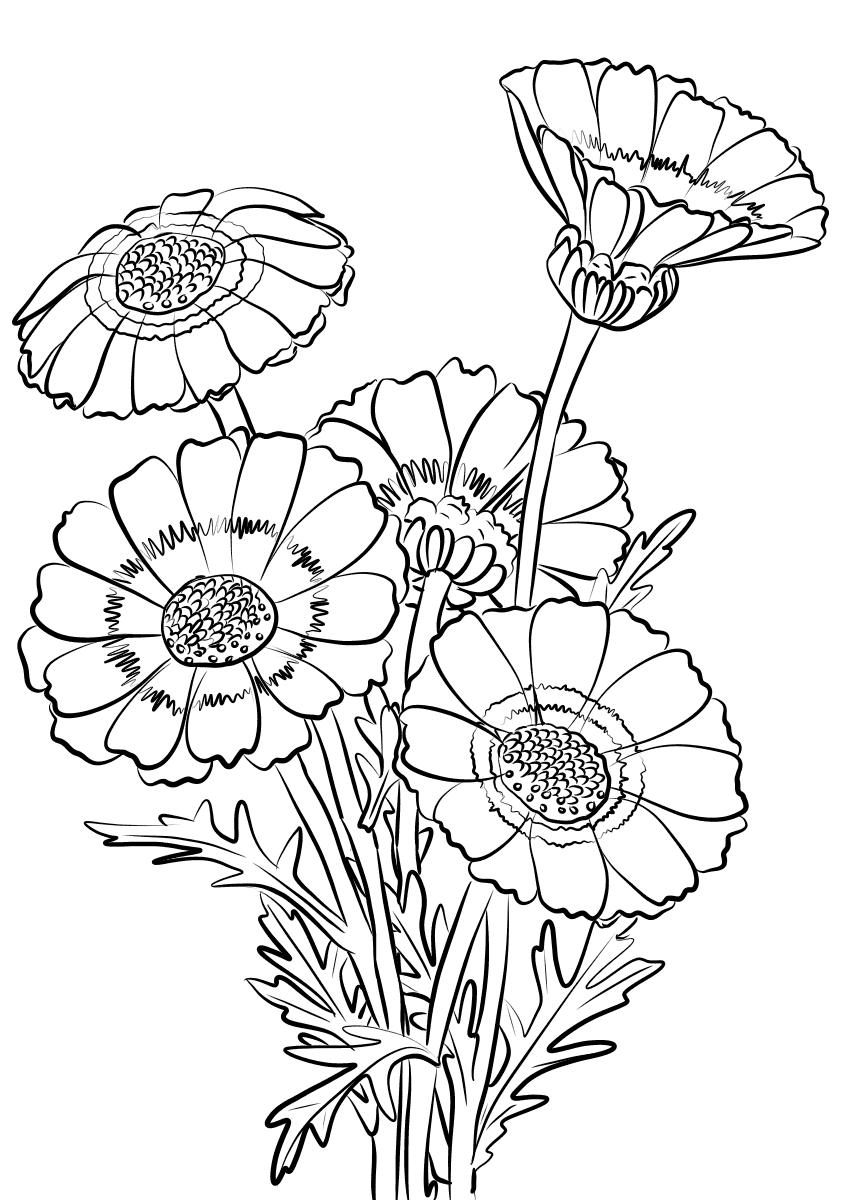 Tranh tô màu hoa cúc cho bé thỏa sức tô màu